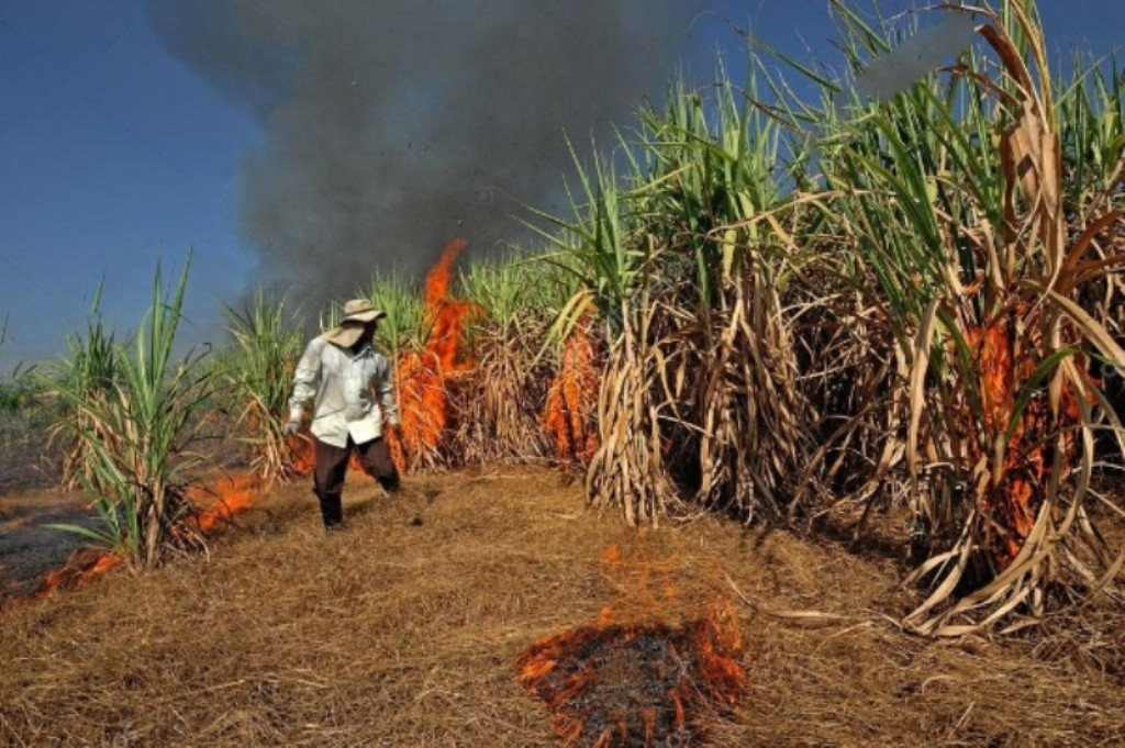 Sugarcane Burning in Eastern Thailand Worsens Air Quality
