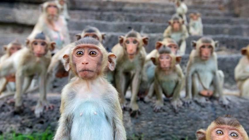 food supply monkeys